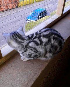 Cat sitting safely on balcony