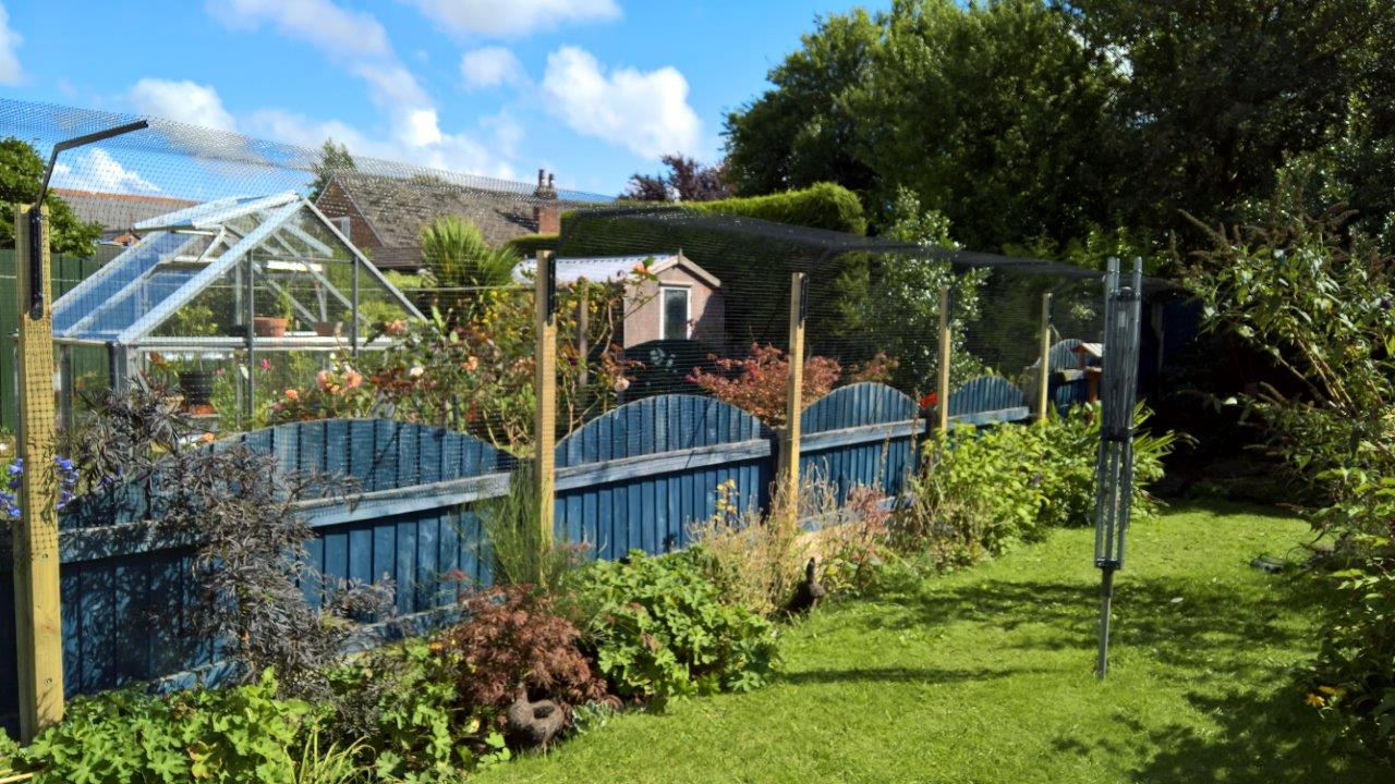 Cat fences attached to low fencing