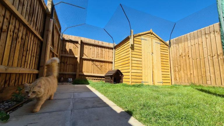 Ccat fencing for garden including shed barrier and beautiful cat
