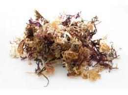 Irish moss-Sea Moss-Carrageen-25gms-Chondus Chrispus