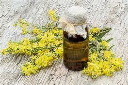 Mullein Flower Oil (Organic)30mls-Carrier(Verbascum Thapus)