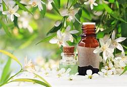 Neroli Fragrance OIl-10mls