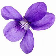 Violets Fragrance oil-10mls