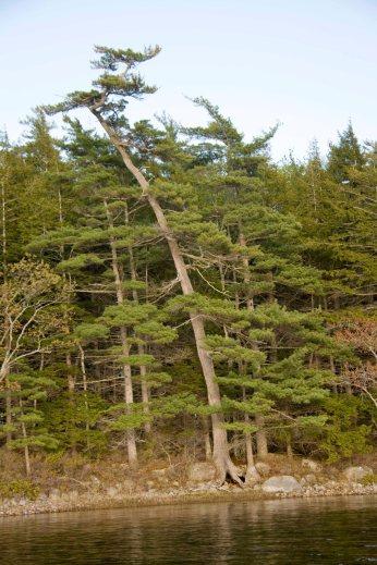 Cet arbre est celui sous lequelle Heather était!