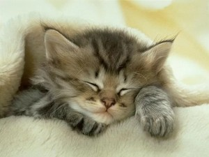 Коты демонстрируют вам свою любовь