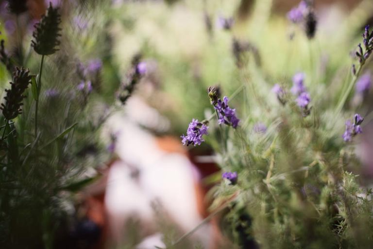 Herbs of south France