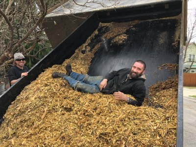 A trailer load of wood chips with a worker laying in them