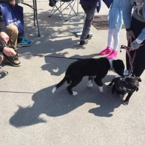 Hundens dag 20. mai 2017