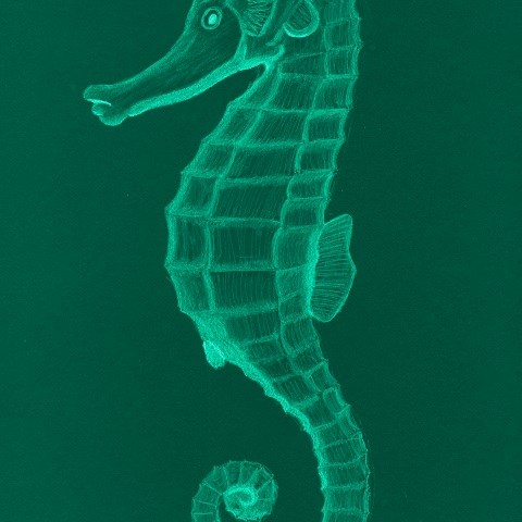 Salty Seahorse - Bright Aqua