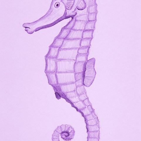 Salty Seahorse - Pastel Purple