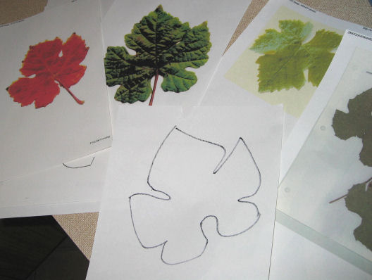 Grape leaves - inspiration