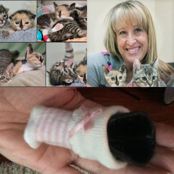 Sophia & Karolyn - Kitten and Veteran Collage