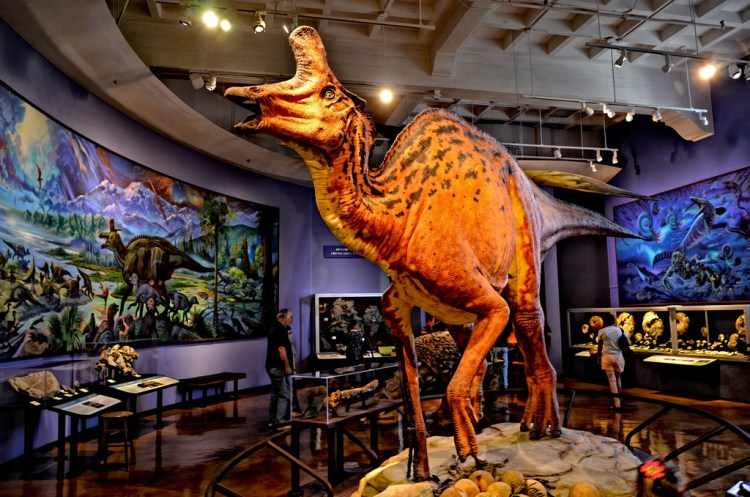 San Diego Natural History Museum- Paleo Lab