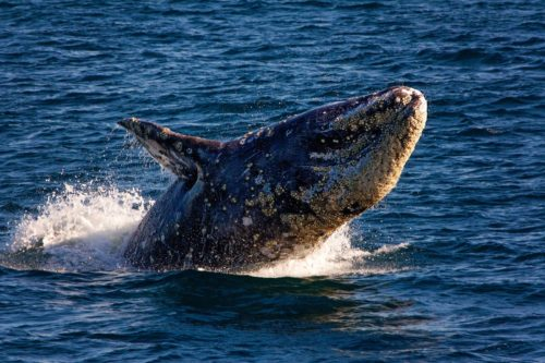 Whale Watching Kicks Off Adventure On The High Seas