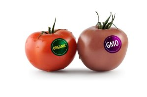 The Fight Against GMOs and Toxic Food
