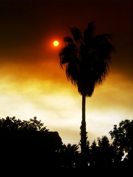 palm tree smoky