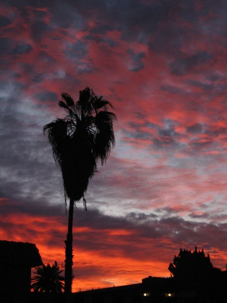 palm tree sunrise