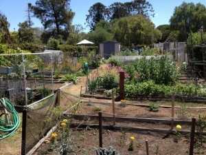 Golden Hill Community Garden