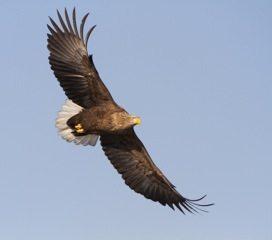 Chp 6 Flying Eagle