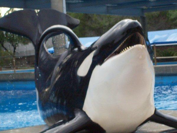 Orca No. 5 Keet