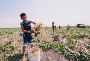 child labor in field