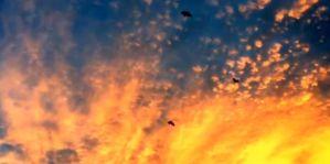 Geo-Poetic Spaces:  Scattering Crows