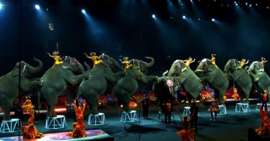 The Ringling Bros. circus elephants have been at the center of lawsuits and ongoing complaints from animal rights activists. (Photo: hpb_pix/flickr/cc)
