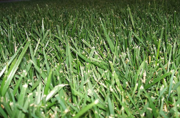 green-grass-lawn