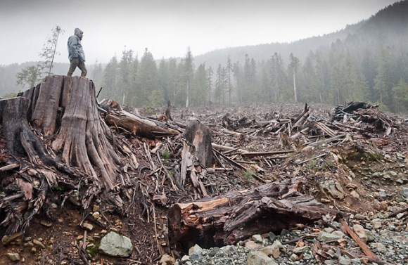 Bugaboo_Creek_Clearcut