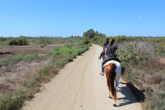 A trail in the Tijuana River Valley