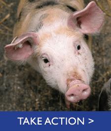 take-action