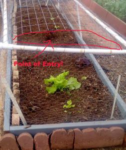 Fenced vegetable garden plot