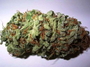 Some cannabis bud, which is well-cured (i.e. dried slowly following a specific procedure). The strain is Sweet Tooth #3