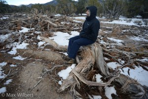 Pinyon-Juniper Forests: The Oldest Refugee Crisis