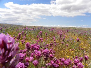 Mojave Desert Blog