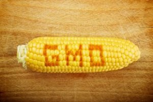 Vermont Now Ground Zero In Fight to Label Genetically Modified Foods