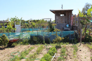 Tijuana River Valley Community Garden