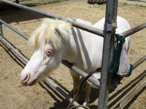 Bella the pony at Ferdinad's Familia