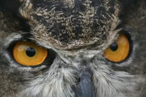 Layla and the Owl's Eyes: Ecopsychology and Being Human