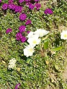 Super Blooms, Desert and Death
