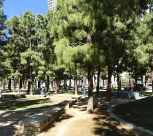 Readers Write: Proposed San Diego Budget Bad News for Urban Forestry