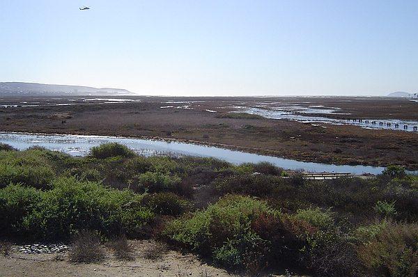 Tijuana Estuary at high tide