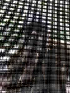 Ernie with sunglasses behind screen