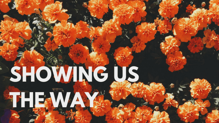 Sermon // Showing Us the Way