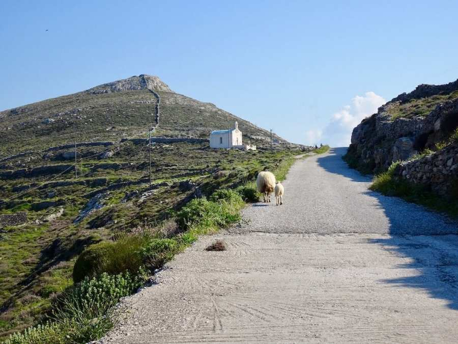 Sheep walking up the street. Greek photo tour