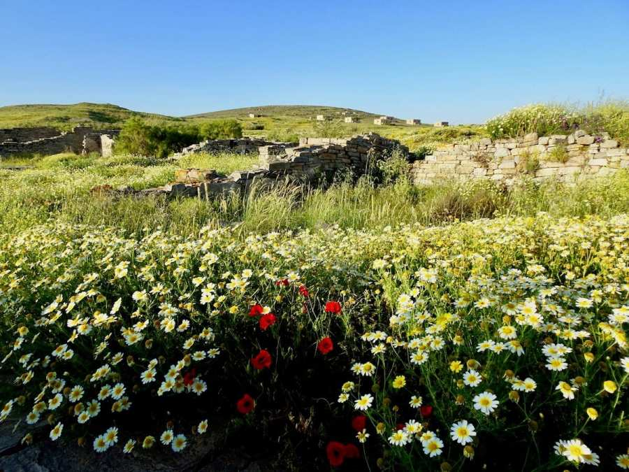 Wildflowers and walls of ancient Delos, Greek Photo tour