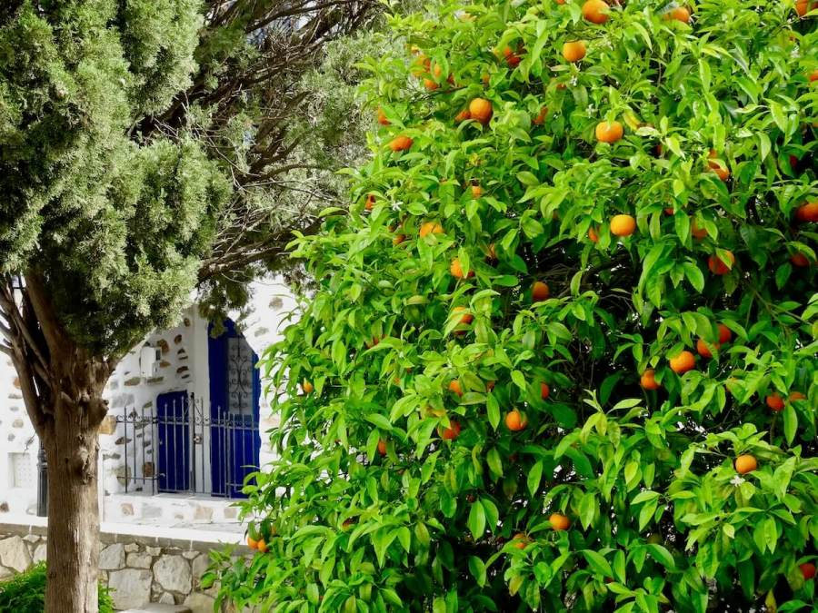 Orange trees and hidden doors, Paros