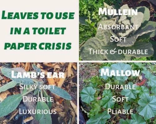 leaves that work for toilet papet meme