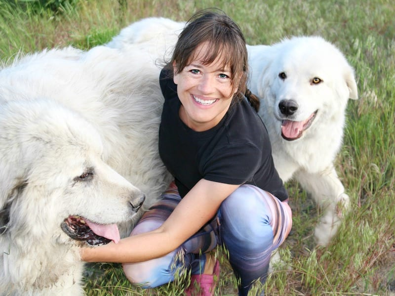 smiling woman with big white fluffy dogs