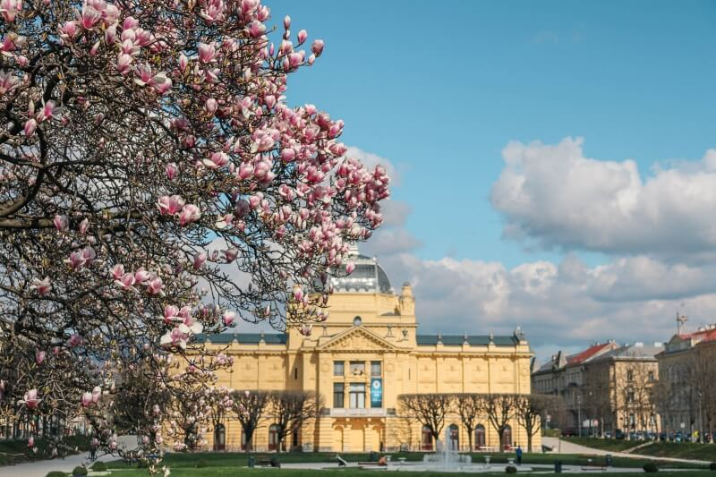 cherry blossoms in Zagreb, Croatia. Reasons to move to another country